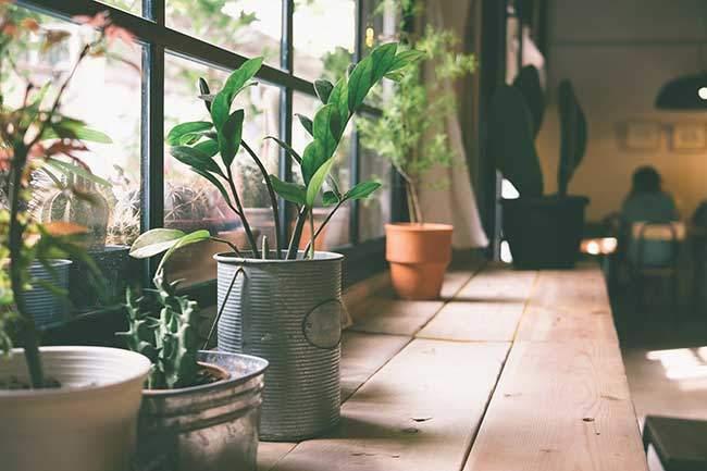 Growing Your Own Veggies