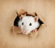 Rodents-Prevention