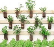 Your Herbal Garden Pharmacy