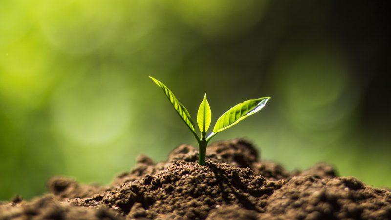 Natural Growing Soil